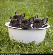 Bucket of Frenchies!