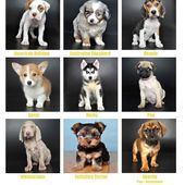 Puppy yearbook, 9 pics