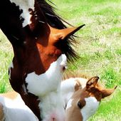 Mommy and her colt