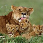 Proud momma and her cubs