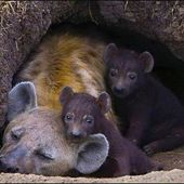 Hyena and her cubs