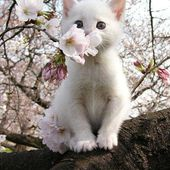 I give you this flower!