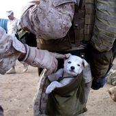 Soldier with small puppy