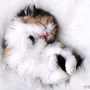 Adorable sleepy kitten