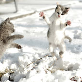 Cute kittens play in snow