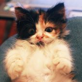 Meow! Gimme your hugs please!