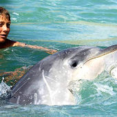 A dolphin rescues a pygmy cachalot