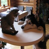 A kitten and dog moment