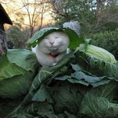 Cabbage Patch Kitty