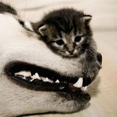 Kitten climbs dogface mountain