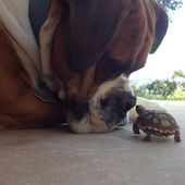 Tortoise Baby and the Dog