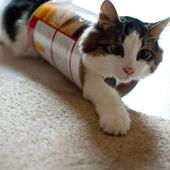 Canned Kitty