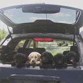 Carload of puppies
