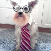 Professor Puppy