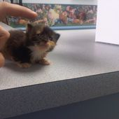 Teeny Tiny Kitty