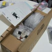 Mail-Order Kitty