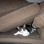 Couch Cushion Kitty