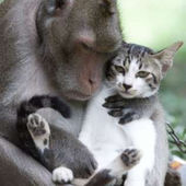 Monkey Loves Kitty