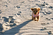 Puppy Hits the Beach