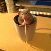 Cup-O-Hamster
