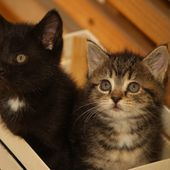 More Box Kittens!