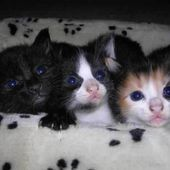 Blue Eyed Trio