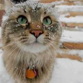 Arctic Kitty