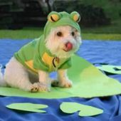 Frog Pup