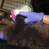 Rescued Sea Otter Pup