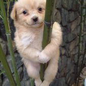 Cute Blonde Pole Dancer