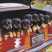 Trunk Puppies