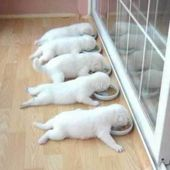 Puppy Buffet
