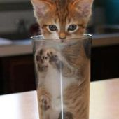 Cute kitty in a glass..