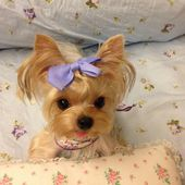 Cute puppy with bow