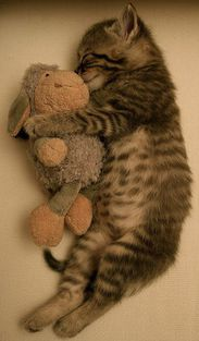 Kitten and his friend