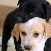 Two adorable pups