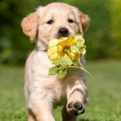I'm brought you a flower.