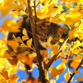 kitten in the tree