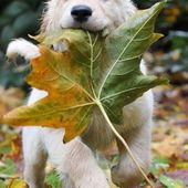 I brought you a leaf