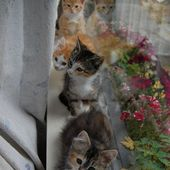 Adorable cute kitties in line...