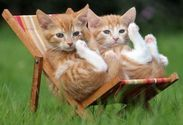 relaxing kittens