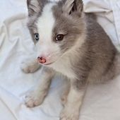 Arctic fox babies are called either pups or kits.