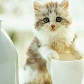 Kitten with cup of milk