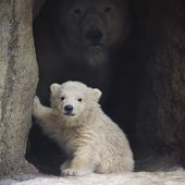 baby bear with mom