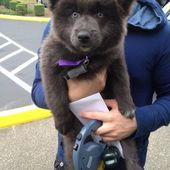 a bear or a puppy