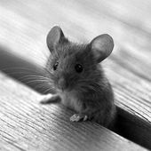 Adorable tiny mouse!