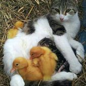 Kitty and chicks