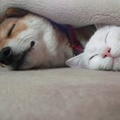 Sleeping buddies