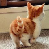 funny ginger kitty