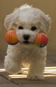 Playful puppy